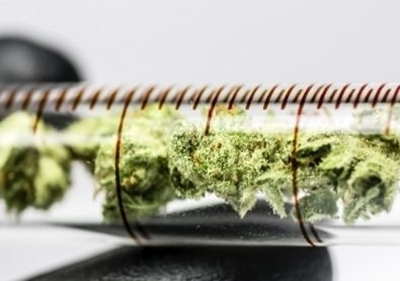 The Role of Chromatography in Cannabis Testing